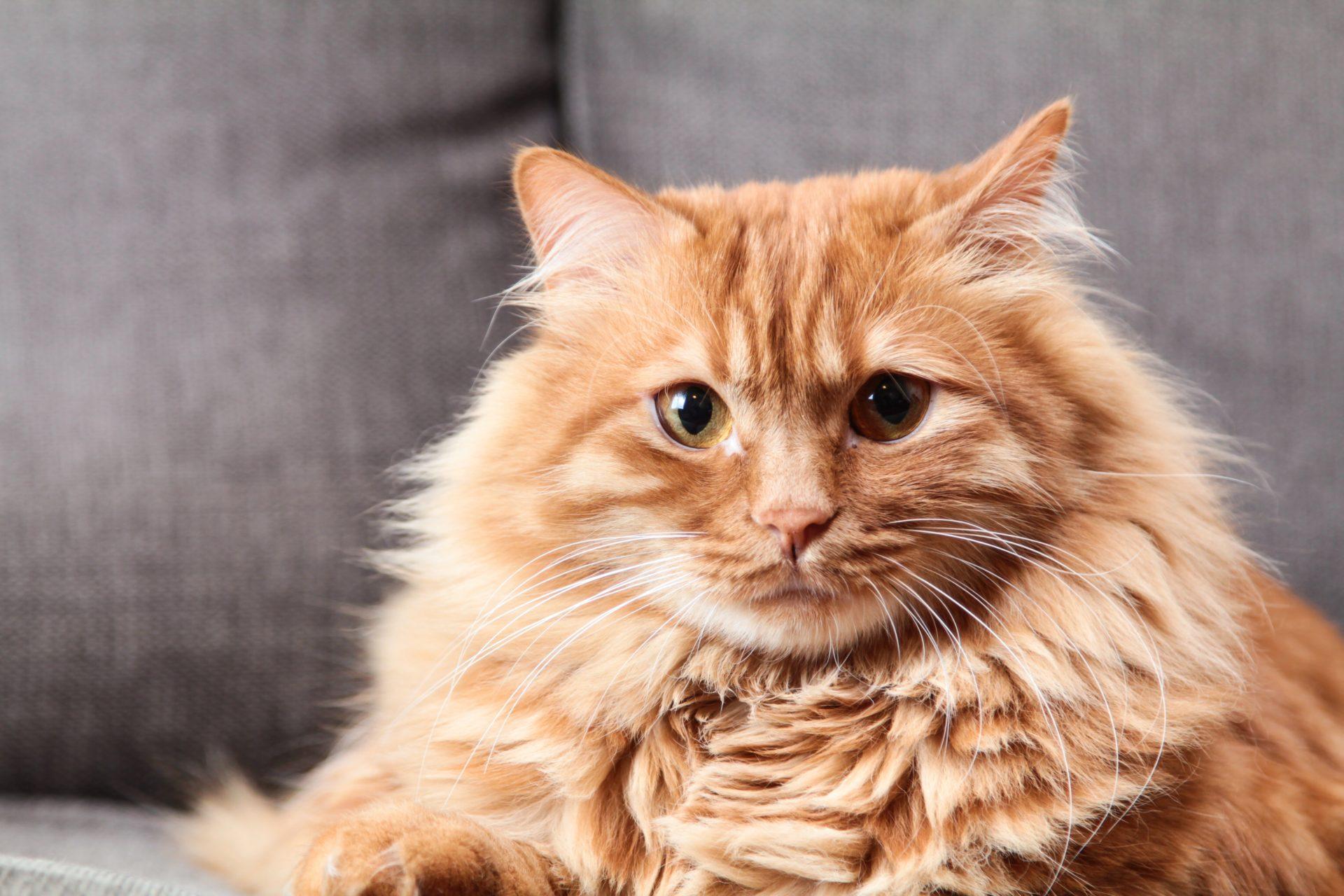 adorable-animal-cat-751050